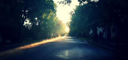 sun shining through trees on a dirt road
